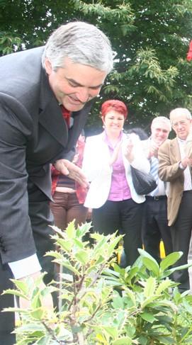 Plantando un rododendro